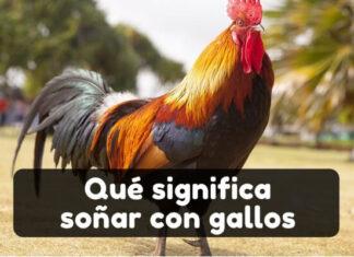 soñar con gallos significados