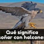 soñar con halcones significado