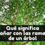 qué significa soñar con las ramas de un árbole