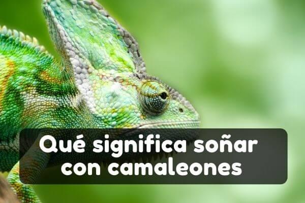 Veo camaleones en sueños