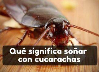 Ver una cucaracha en sueños