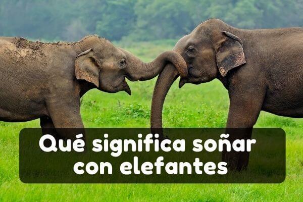 Ver elefantes en sueños