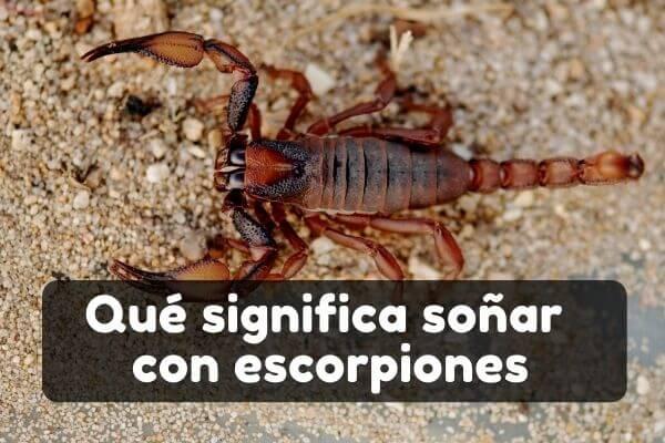 Ver escorpiones en sueños