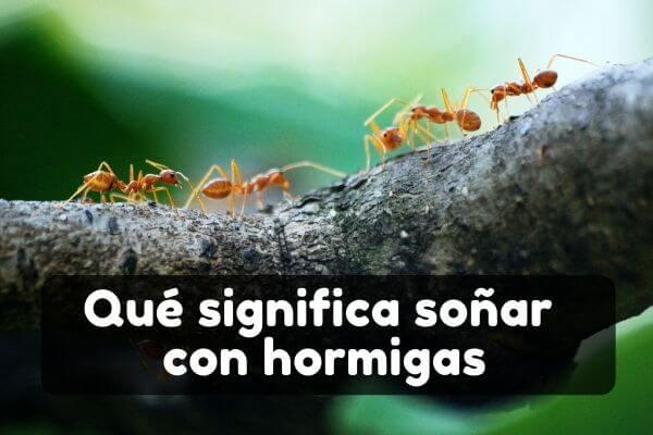 Ver hormigas en sueños