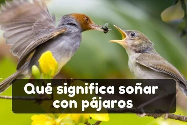 Ver pájaros en sueños