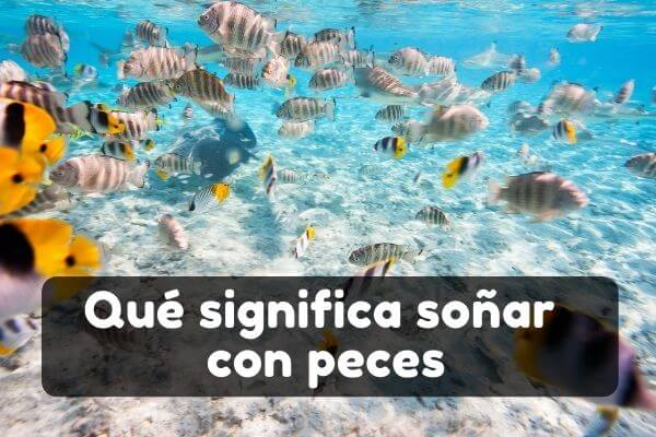 Ver peces en sueños