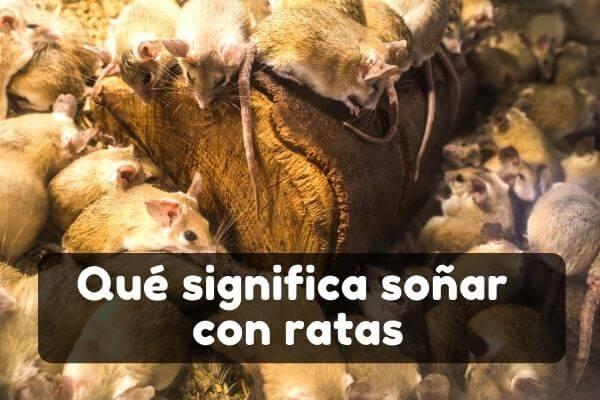 Ver ratas en sueños