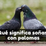 significado de soñar con palomas